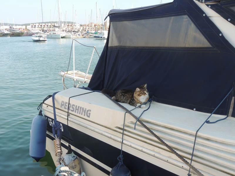 Chat à bord d'un bateau