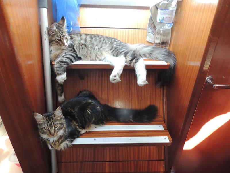 Arbre à chat du bateau